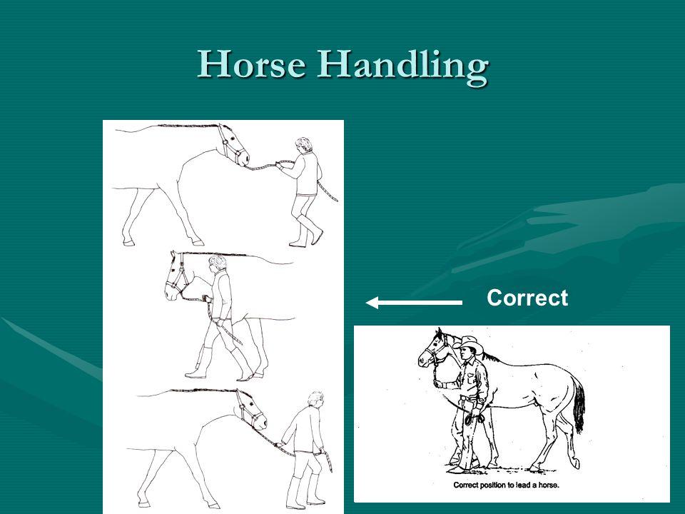 Horse Handling Correct