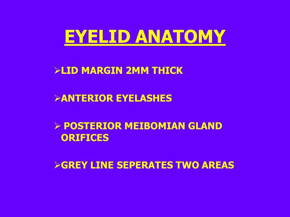 EYELID ANATOMY  LID MARGIN 2MM THICK  ANTERIOR EYELASHES  POSTERIOR MEIBOMIAN GLAND ORIFICES  GREY LINE SEPERATES TWO AREAS