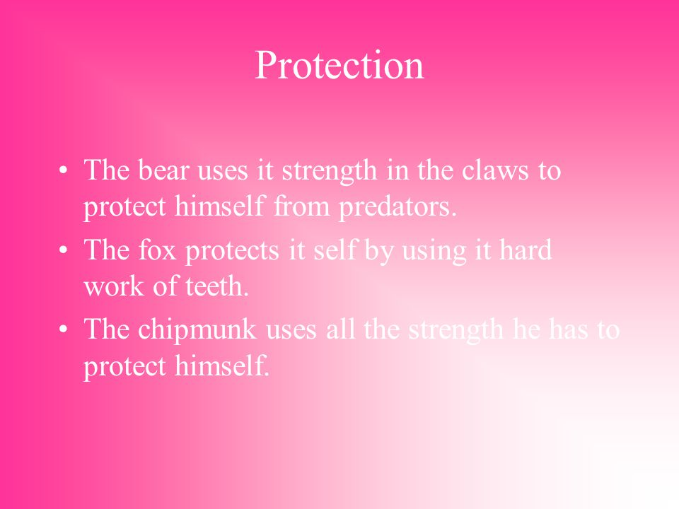Protection The bear uses it strength in the claws to protect himself from predators.