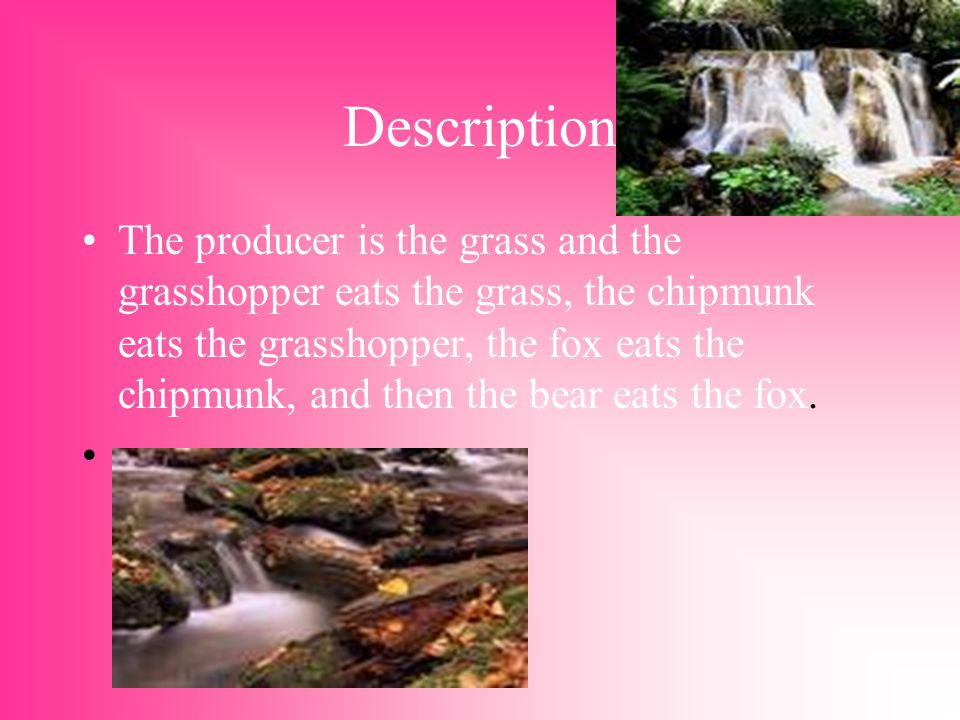 Description The producer is the grass and the grasshopper eats the grass, the chipmunk eats the grasshopper, the fox eats the chipmunk, and then the bear eats the fox.