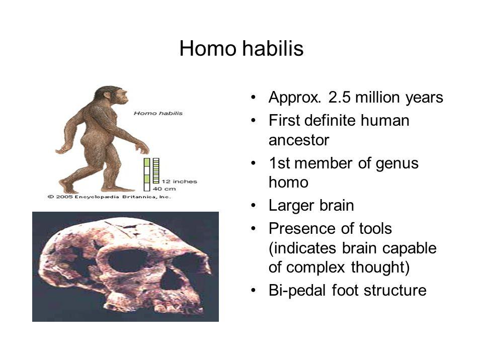 Homo habilis Approx. 2.5 million years First definite human ancestor 1st member of genus homo Larger brain Presence of tools (indicates brain capable