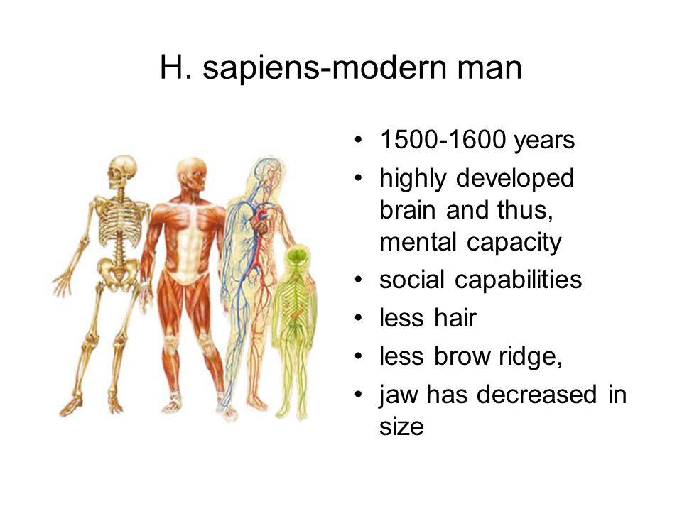 H. sapiens-modern man 1500-1600 years highly developed brain and thus, mental capacity social capabilities less hair less brow ridge, jaw has decrease
