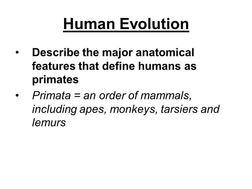 Describe the major anatomical features that define humans as primates Primata = an order of mammals, including apes, monkeys, tarsiers and lemurs