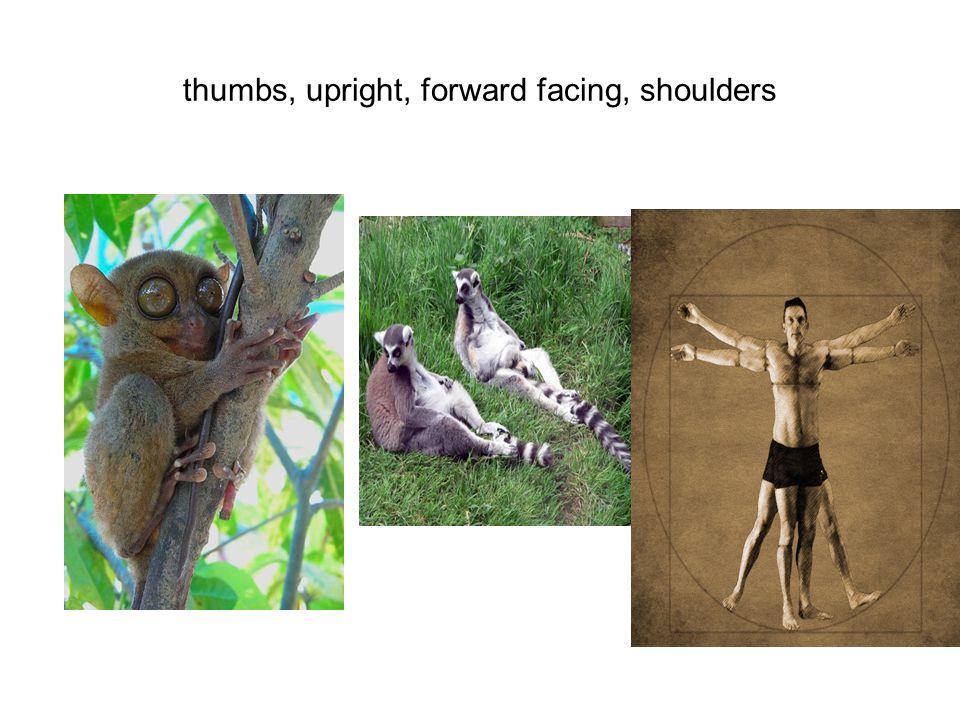 thumbs, upright, forward facing, shoulders