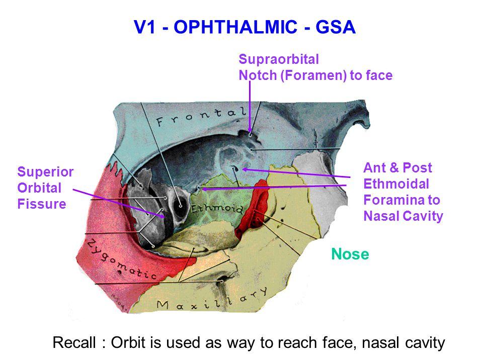 Zygomaticotemporal Foramen Notch  Foramen  to face