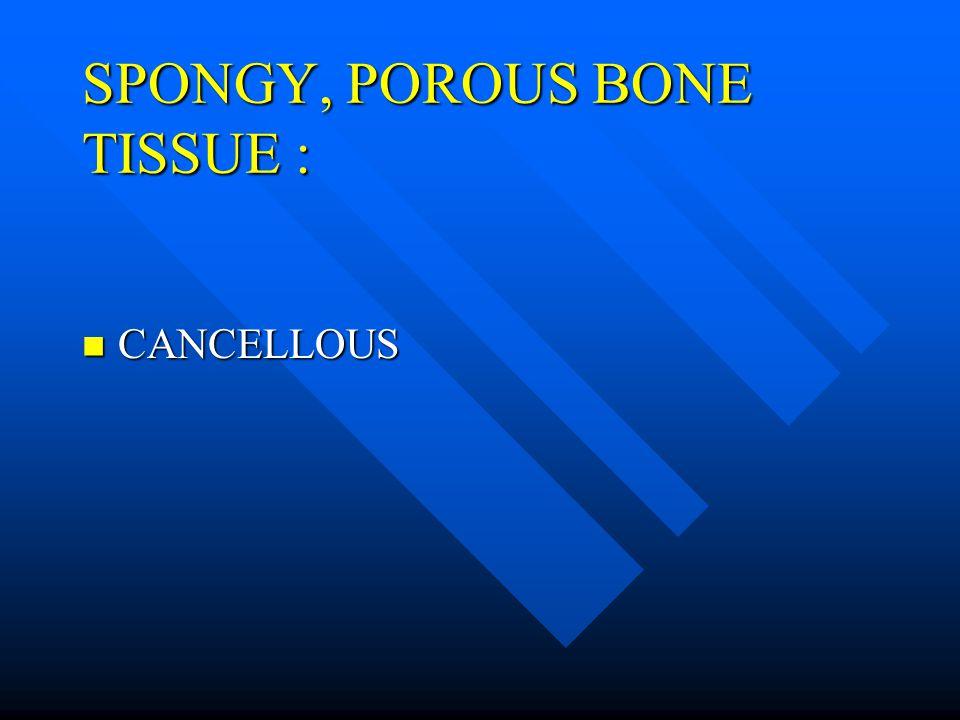 SPONGY, POROUS BONE TISSUE : CANCELLOUS CANCELLOUS