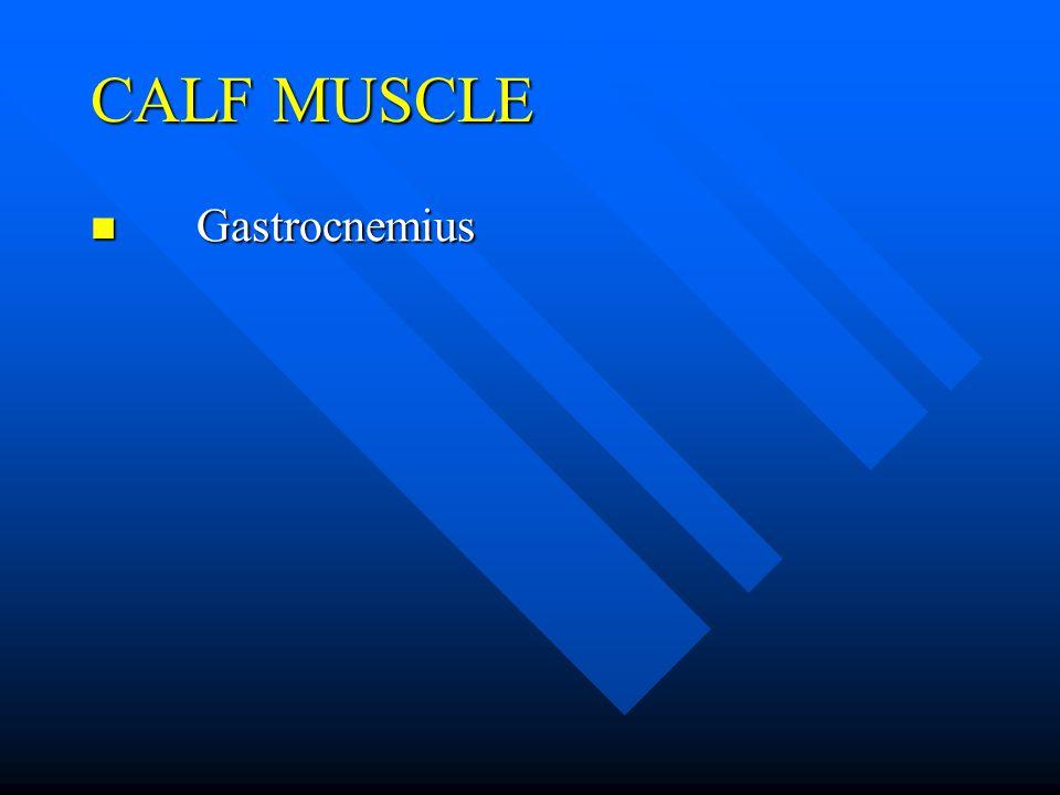 CALF MUSCLE Gastrocnemius Gastrocnemius