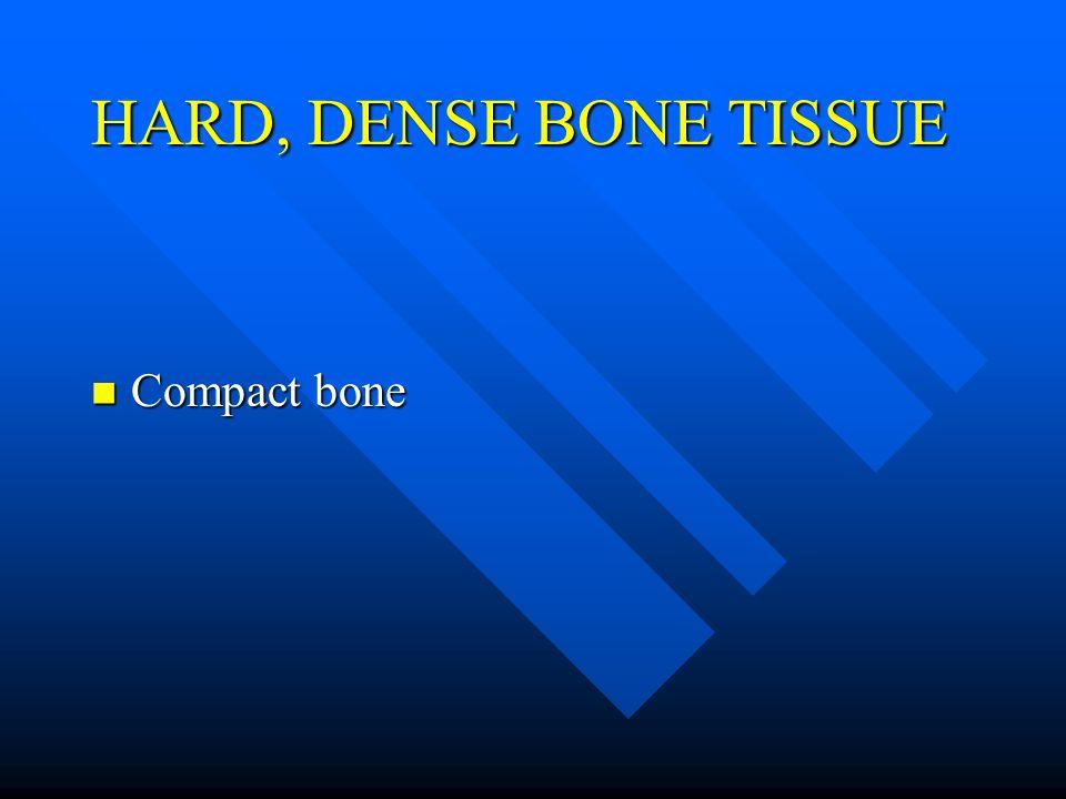 HARD, DENSE BONE TISSUE Compact bone Compact bone
