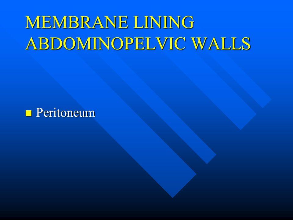MEMBRANE LINING ABDOMINOPELVIC WALLS Peritoneum Peritoneum