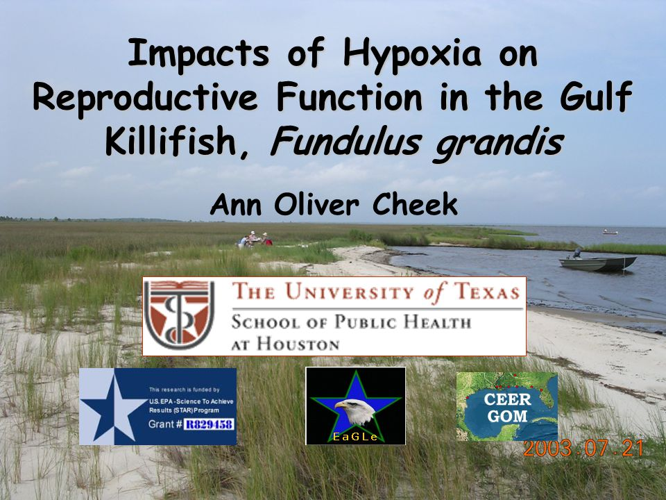 Impacts of Hypoxia on Reproductive Function in the Gulf Killifish, Fundulus grandis Ann Oliver Cheek