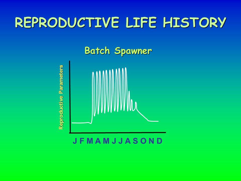 REPRODUCTIVE LIFE HISTORY J F M A M J J A S O N D Batch Spawner Reproductive Parameters