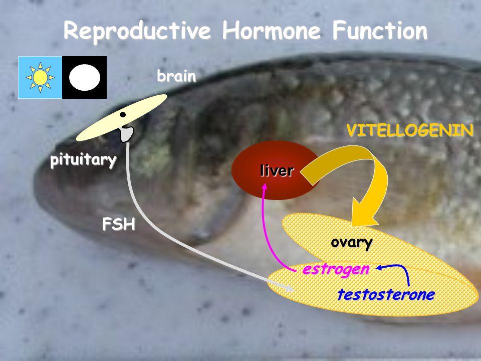 Reproductive Hormone Function liver ovary pituitary estrogen brain FSH testosteroneVITELLOGENIN