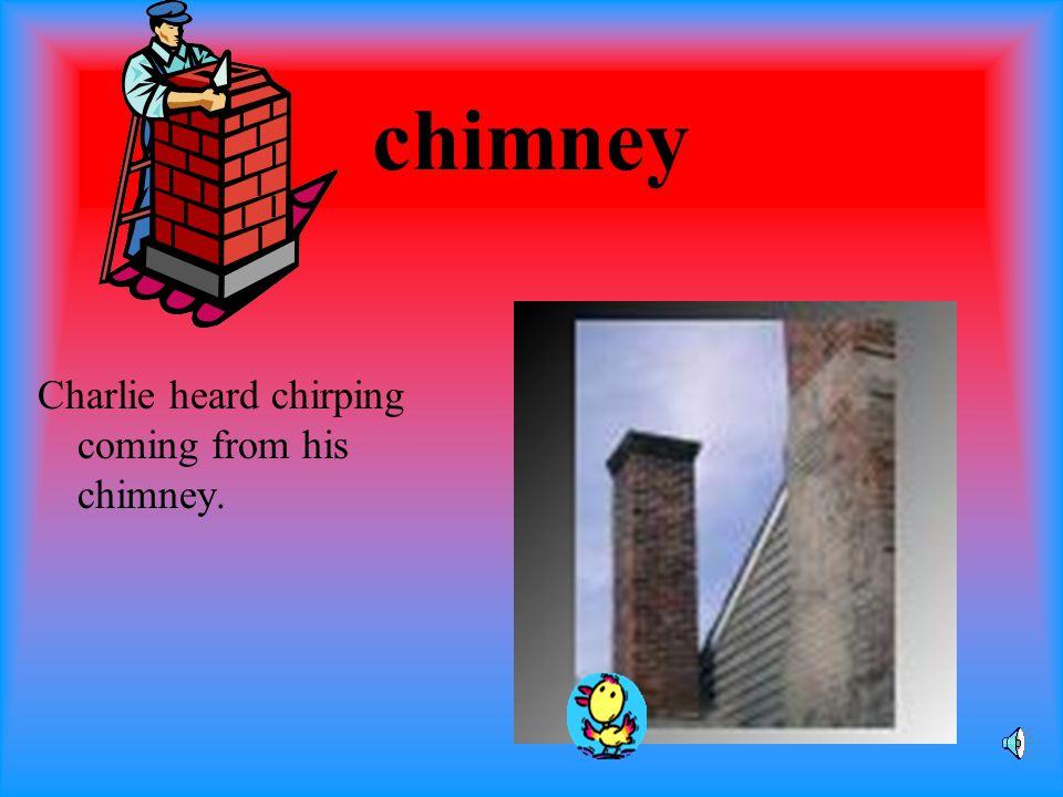 chimpanzee The chimpanzee chomped on the Chiquita banana.