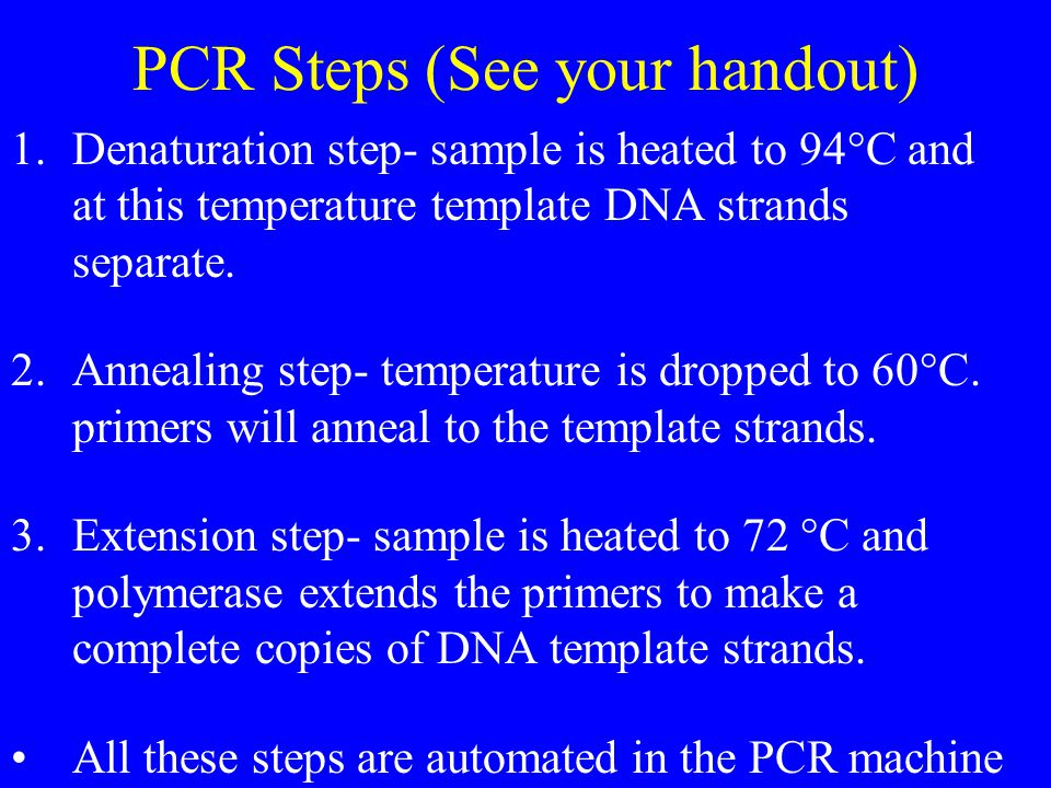 PCR Steps (See your handout) 1.Denaturation step- sample is heated to 94°C and at this temperature template DNA strands separate.