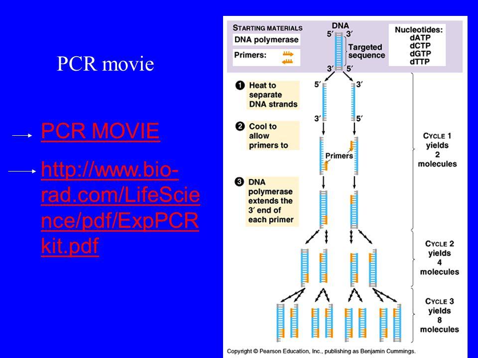 PCR MOVIE http://www.bio- rad.com/LifeScie nce/pdf/ExpPCR kit.pdf PCR movie