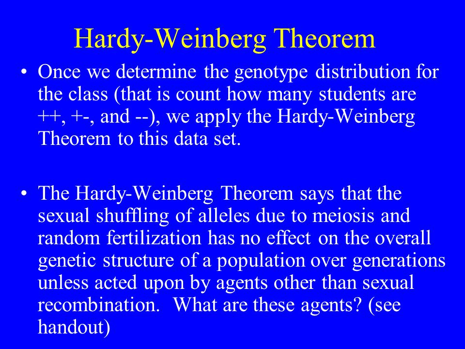 Hardy-Weinberg Theorem Once we determine the genotype distribution for the class (that is count how many students are ++, +-, and --), we apply the Hardy-Weinberg Theorem to this data set.