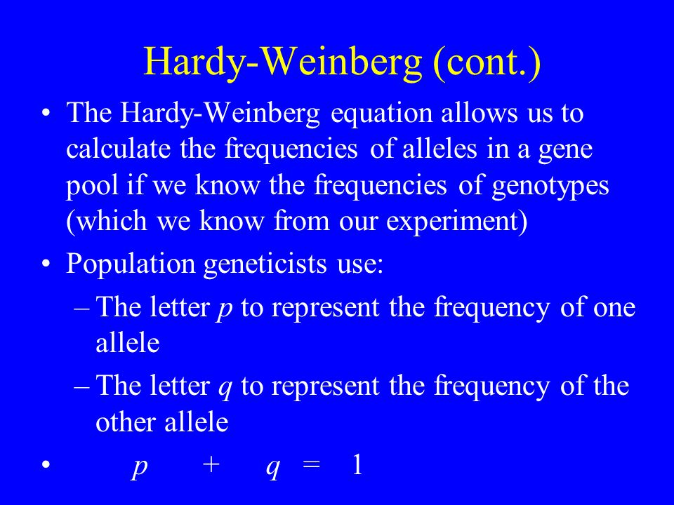 Hardy-Weinberg (cont.) The Hardy-Weinberg equation allows us to calculate the frequencies of alleles in a gene pool if we know the frequencies of genotypes (which we know from our experiment) Population geneticists use: –The letter p to represent the frequency of one allele –The letter q to represent the frequency of the other allele p + q = 1