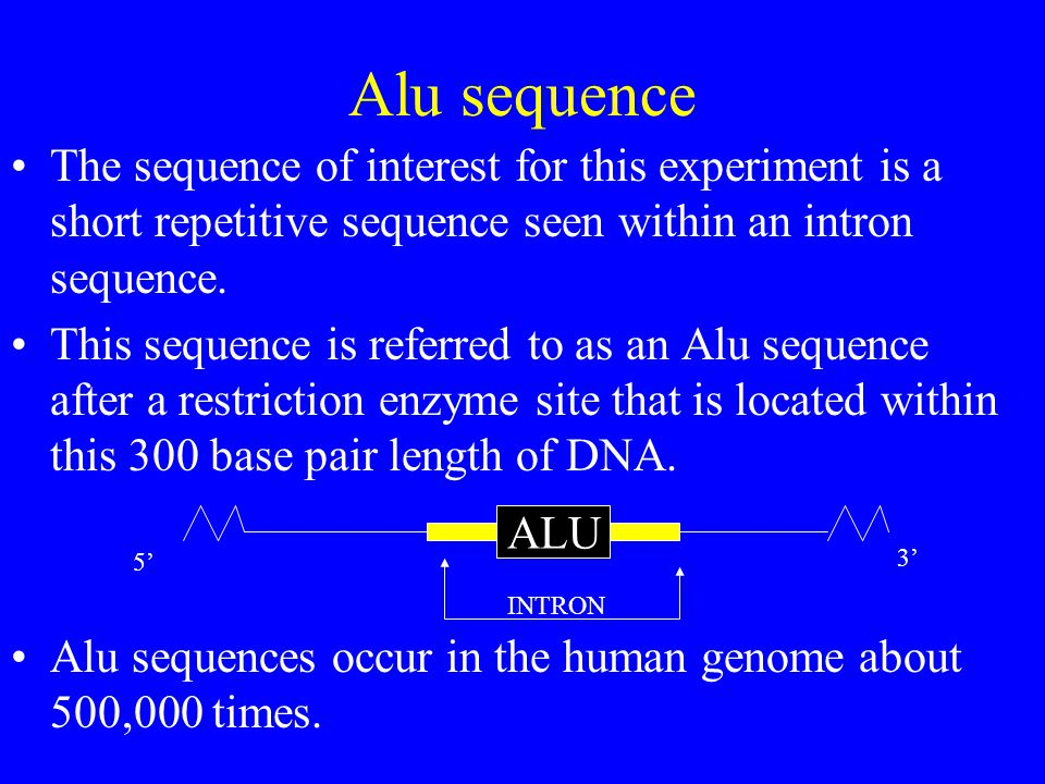 Alu sequence The sequence of interest for this experiment is a short repetitive sequence seen within an intron sequence.