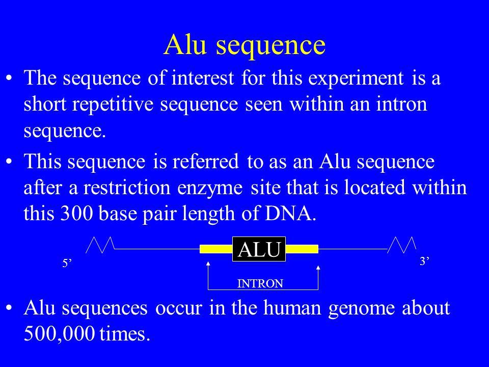 Gel Electrophoresis Separates Shorter DNA Fragments from Longer DNA Fragments.