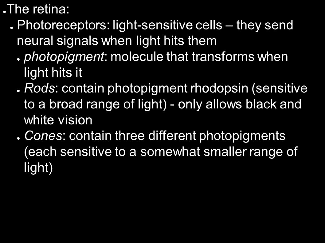 ● The retina: ● Photoreceptors: light-sensitive cells – they send neural signals when light hits them ● photopigment: molecule that transforms when light hits it ● Rods: contain photopigment rhodopsin (sensitive to a broad range of light) - only allows black and white vision ● Cones: contain three different photopigments (each sensitive to a somewhat smaller range of light)