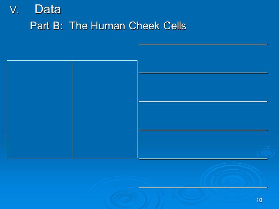 10 V. Data Part B: The Human Cheek Cells _____________________ _______________________________________________________________________________________
