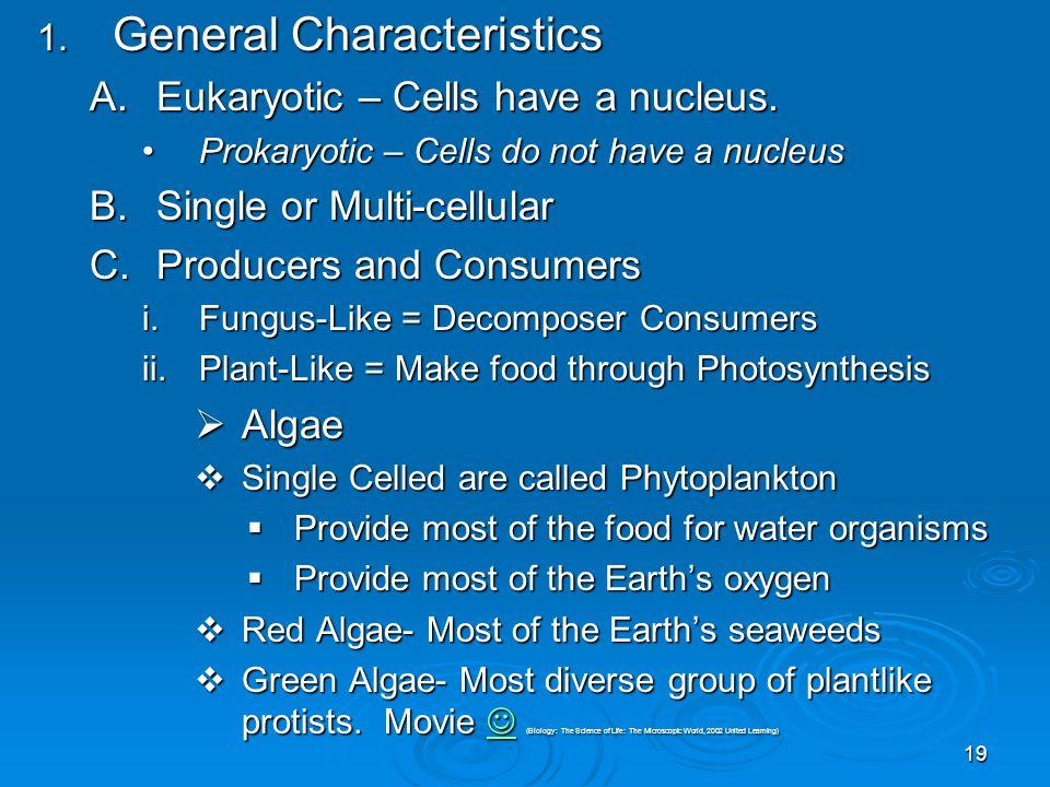19 1. General Characteristics A.Eukaryotic – Cells have a nucleus. Prokaryotic – Cells do not have a nucleusProkaryotic – Cells do not have a nucleus
