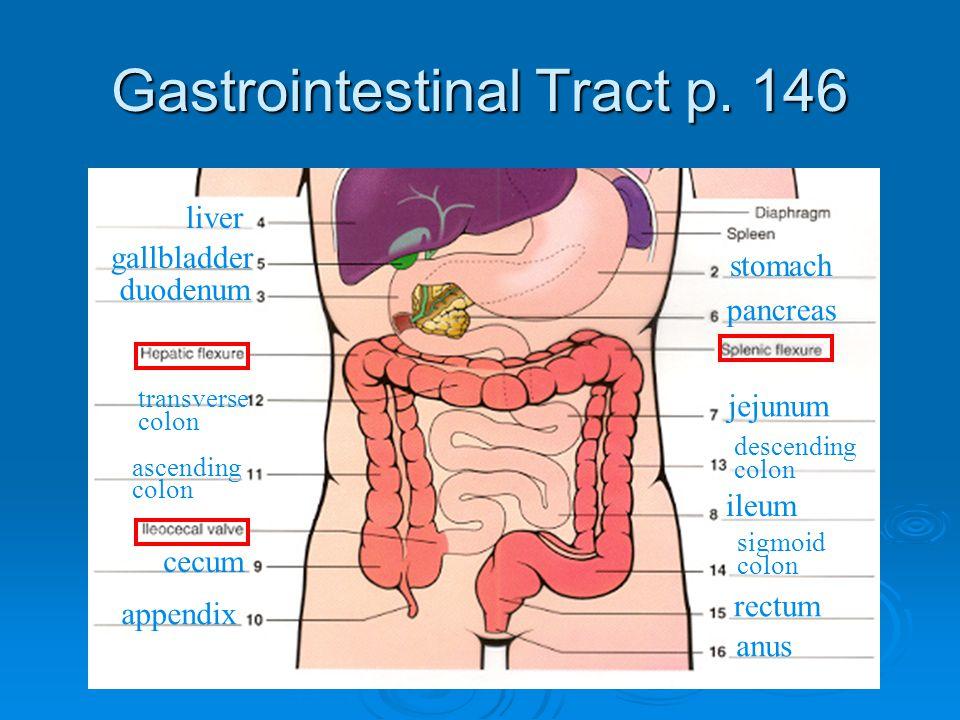 Gastrointestinal Tract p.