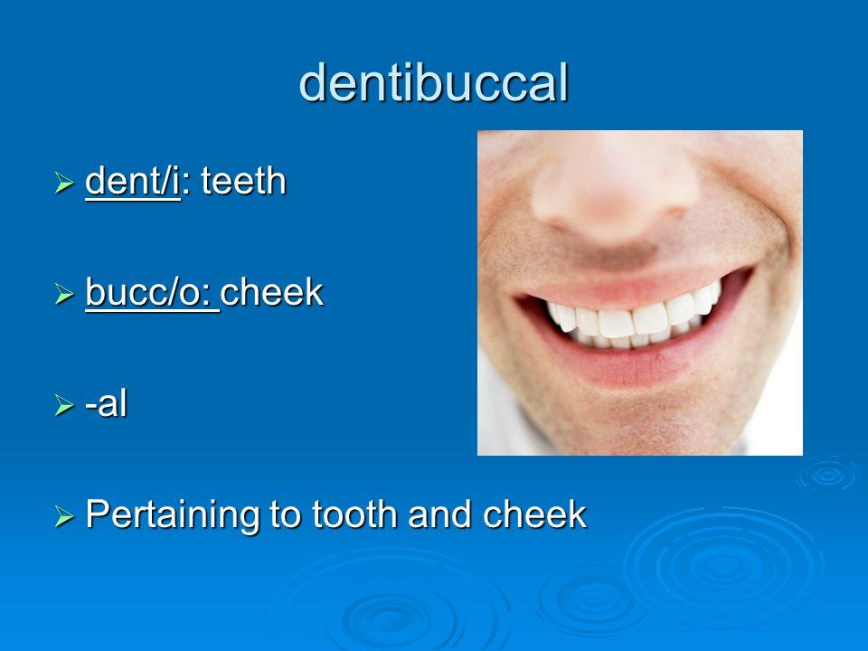 dentibuccal  dent/i: teeth  bucc/o: cheek  -al  Pertaining to tooth and cheek