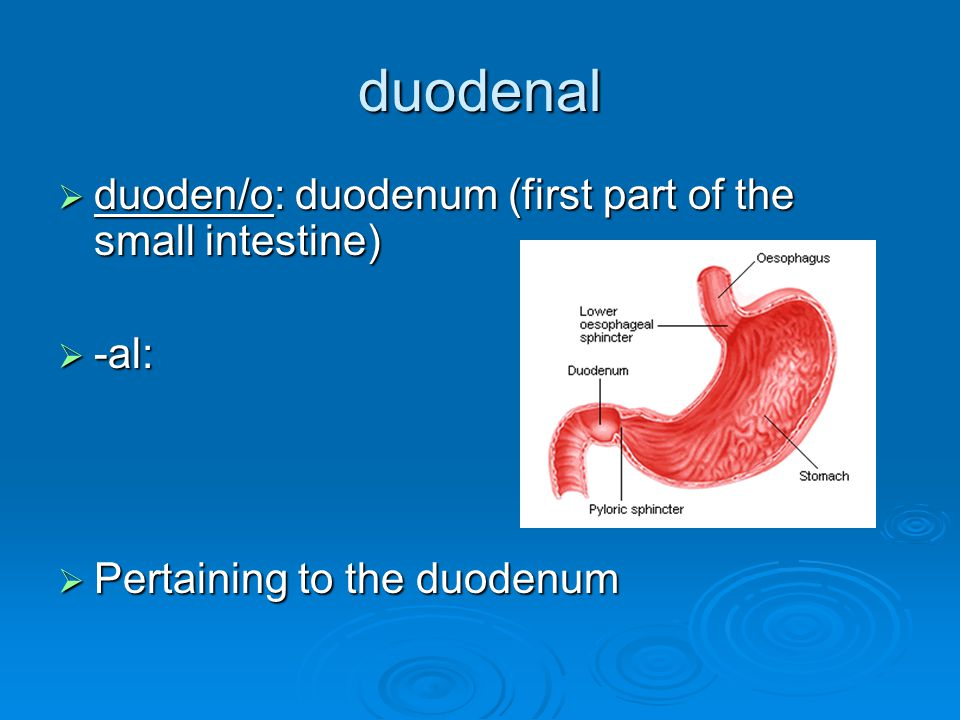 duodenal  duoden/o: duodenum (first part of the small intestine)  -al:  Pertaining to the duodenum