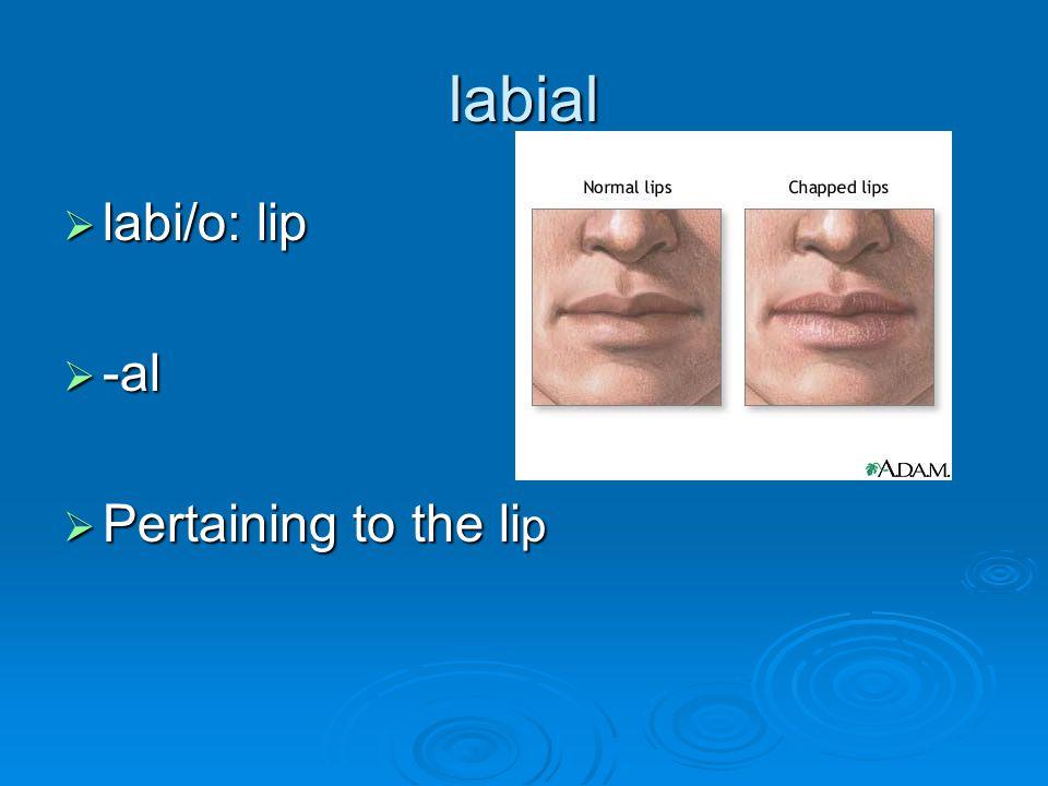 labial  labi/o: lip  -al  Pertaining to the li p