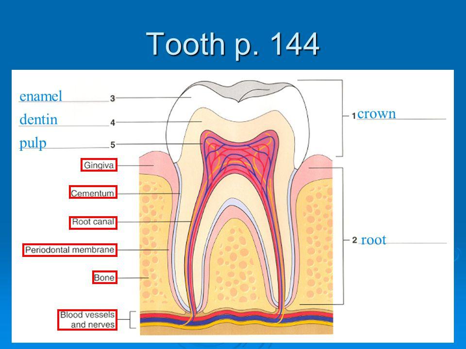 Tooth p. 144 crown root enamel dentin pulp