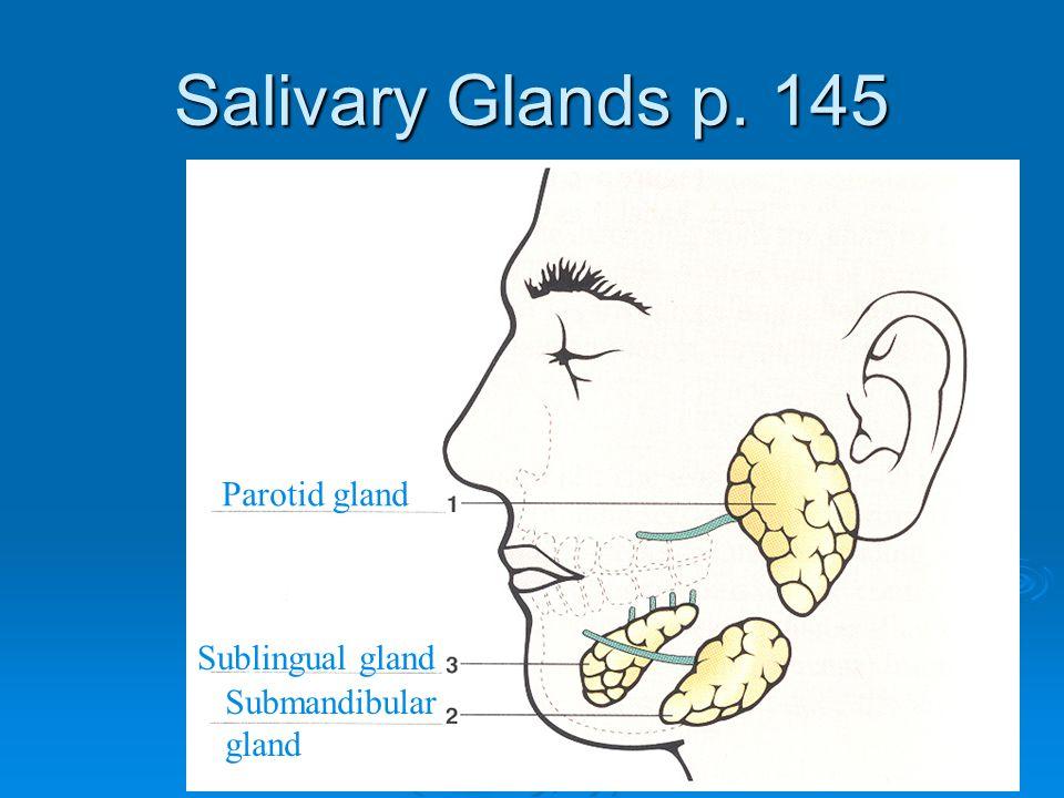 Salivary Glands p. 145 Parotid gland Submandibular gland Sublingual gland
