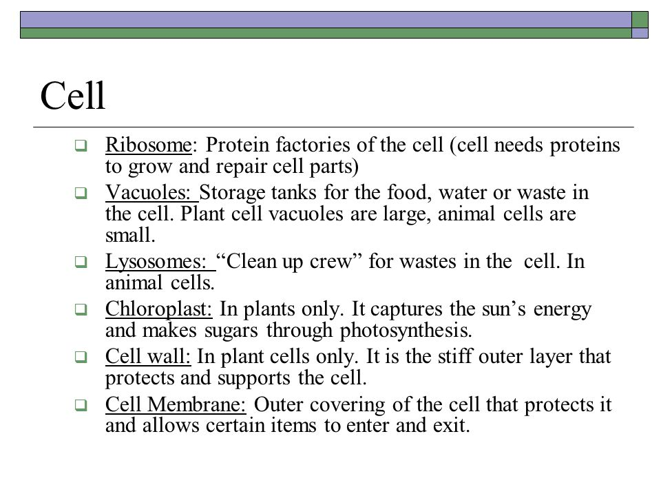 Cell  Ribosome: Protein factories of the cell (cell needs proteins to grow and repair cell parts)  Vacuoles: Storage tanks for the food, water or waste in the cell.