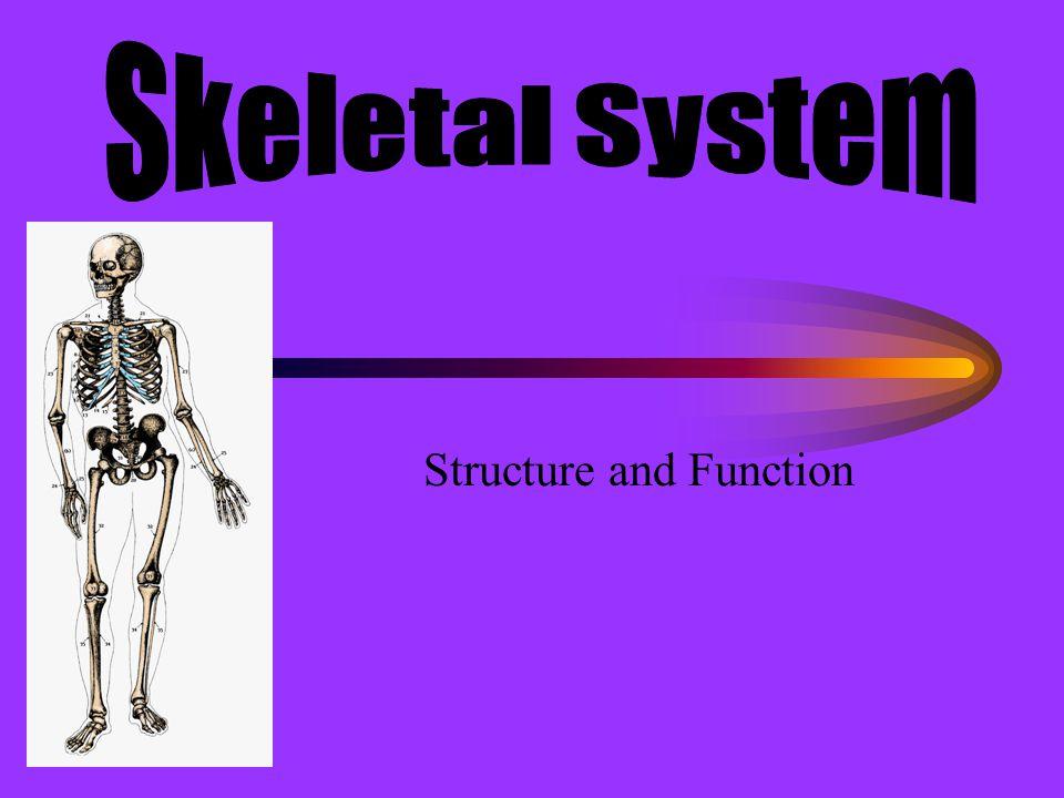 Short Bones Cube-shaped Allows flexible movement Cancellous bone covered by compact bone Carpals, tarsals, metacarpals, metatarsals, phalanges