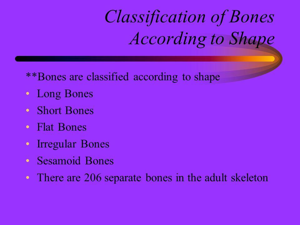 Classification of Bones According to Shape **Bones are classified according to shape Long Bones Short Bones Flat Bones Irregular Bones Sesamoid Bones