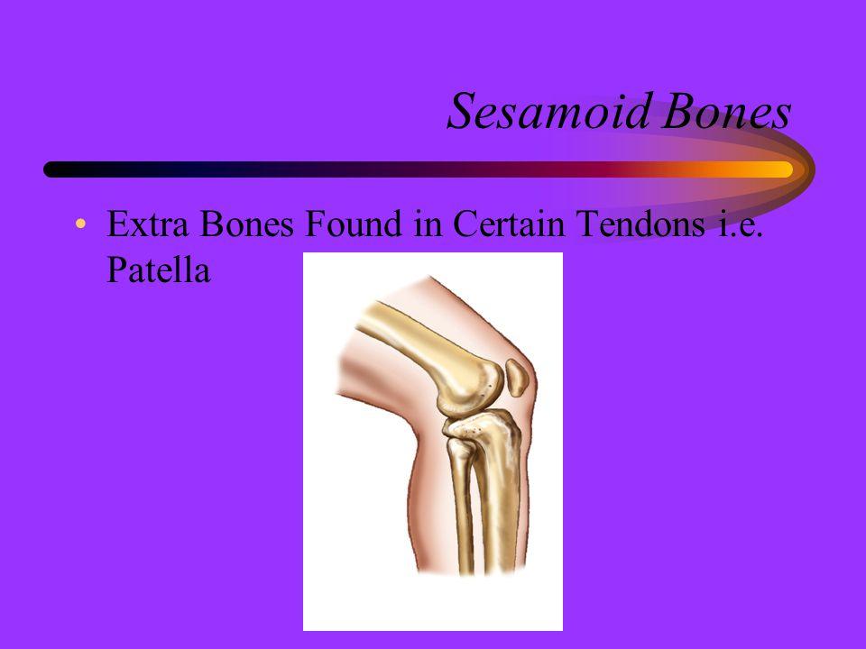 Sesamoid Bones Extra Bones Found in Certain Tendons i.e. Patella