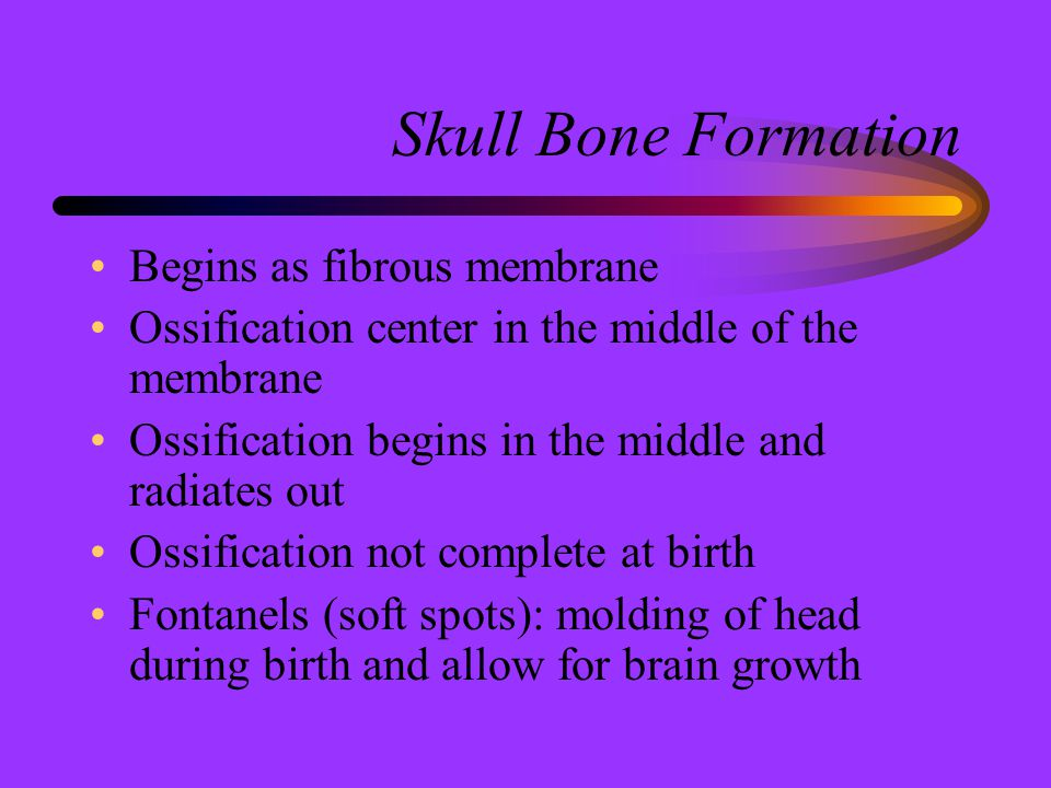 Skull Bone Formation Begins as fibrous membrane Ossification center in the middle of the membrane Ossification begins in the middle and radiates out O