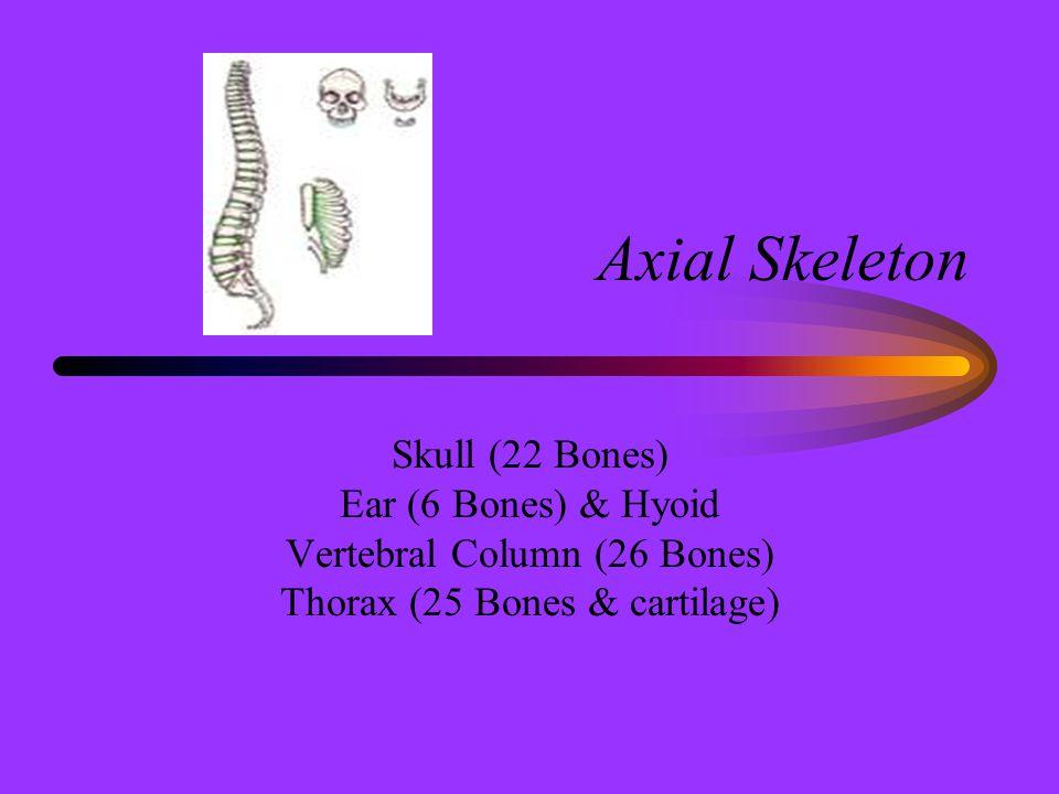 Axial Skeleton Skull (22 Bones) Ear (6 Bones) & Hyoid Vertebral Column (26 Bones) Thorax (25 Bones & cartilage)