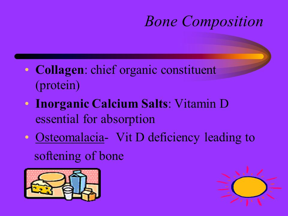 Irregular Bones Peculiarly Shaped to Provide Support and Protection with Flexibility Vertebrae, Ribs, Ear, Hip, Hyoid
