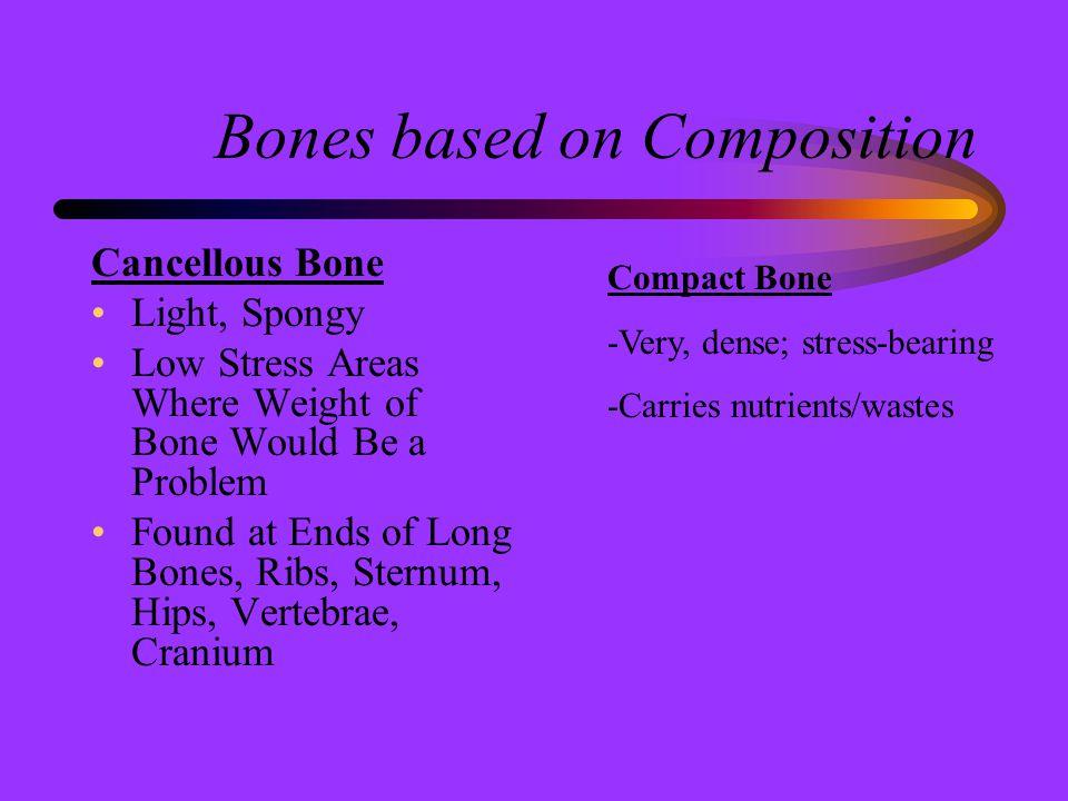 Classification of Bones According to Shape **Bones are classified according to shape Long Bones Short Bones Flat Bones Irregular Bones Sesamoid Bones There are 206 separate bones in the adult skeleton