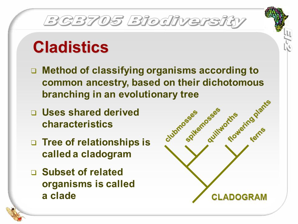   Method of classifying organisms according to common ancestry, based on their dichotomous branching in an evolutionary tree   Uses shared derived