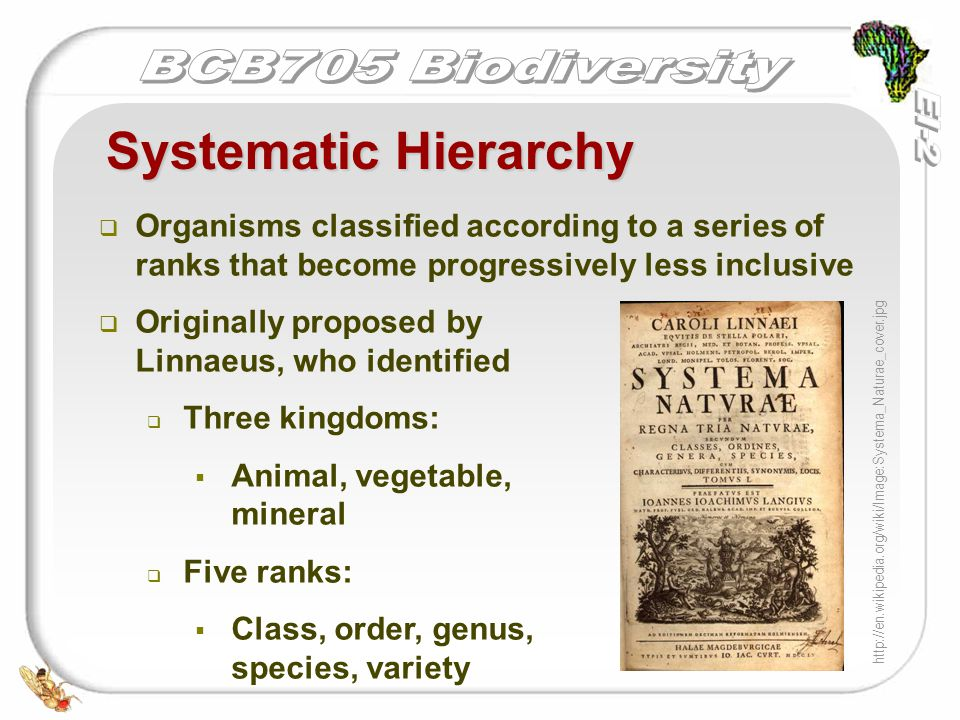   Organisms classified according to a series of ranks that become progressively less inclusive   Originally proposed by Linnaeus, who identified 