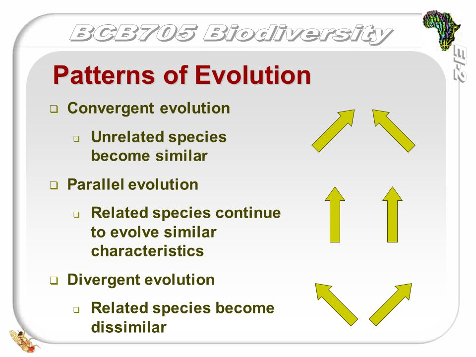   Convergent evolution   Unrelated species become similar   Parallel evolution   Related species continue to evolve similar characteristics   Divergent evolution   Related species become dissimilar Patterns of Evolution