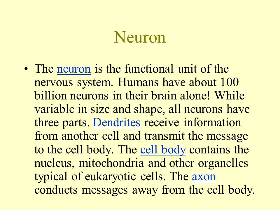 Neuron The neuron is the functional unit of the nervous system.