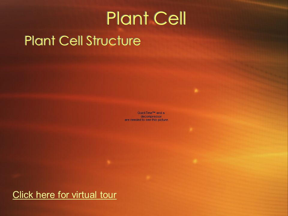 Plant Cell Plant Cell Structure Click here for virtual tour