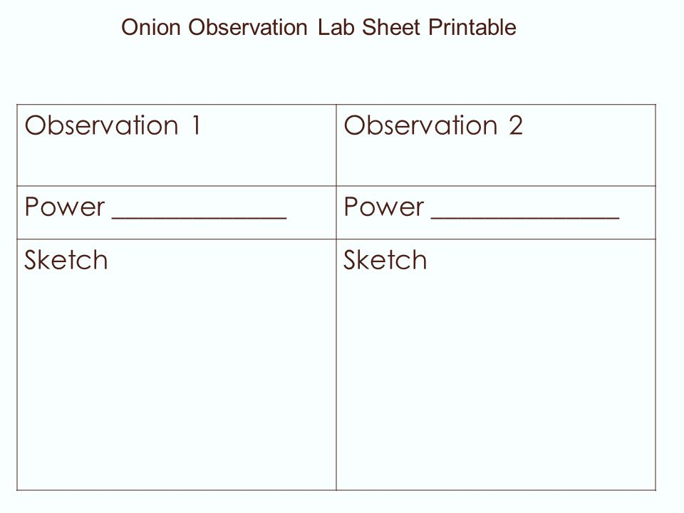 Observation 1Observation 2 Power _____________Power ______________ Sketch Onion Observation Lab Sheet Printable