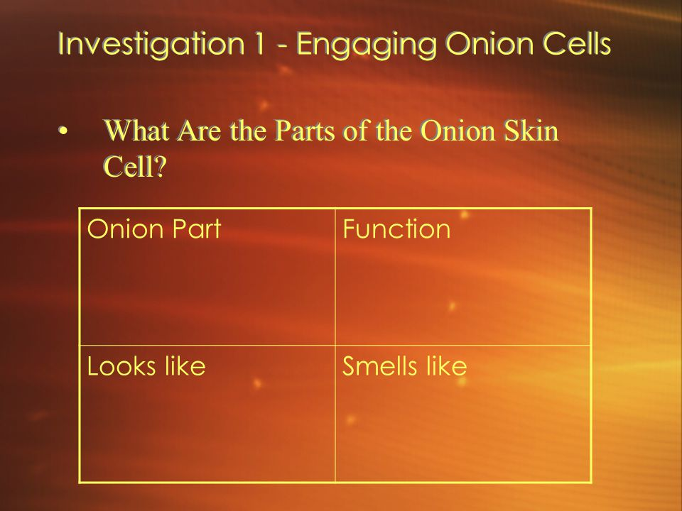 Investigation 1 - Engaging Onion Cells What Are the Parts of the Onion Skin Cell? Onion PartFunction Looks likeSmells like