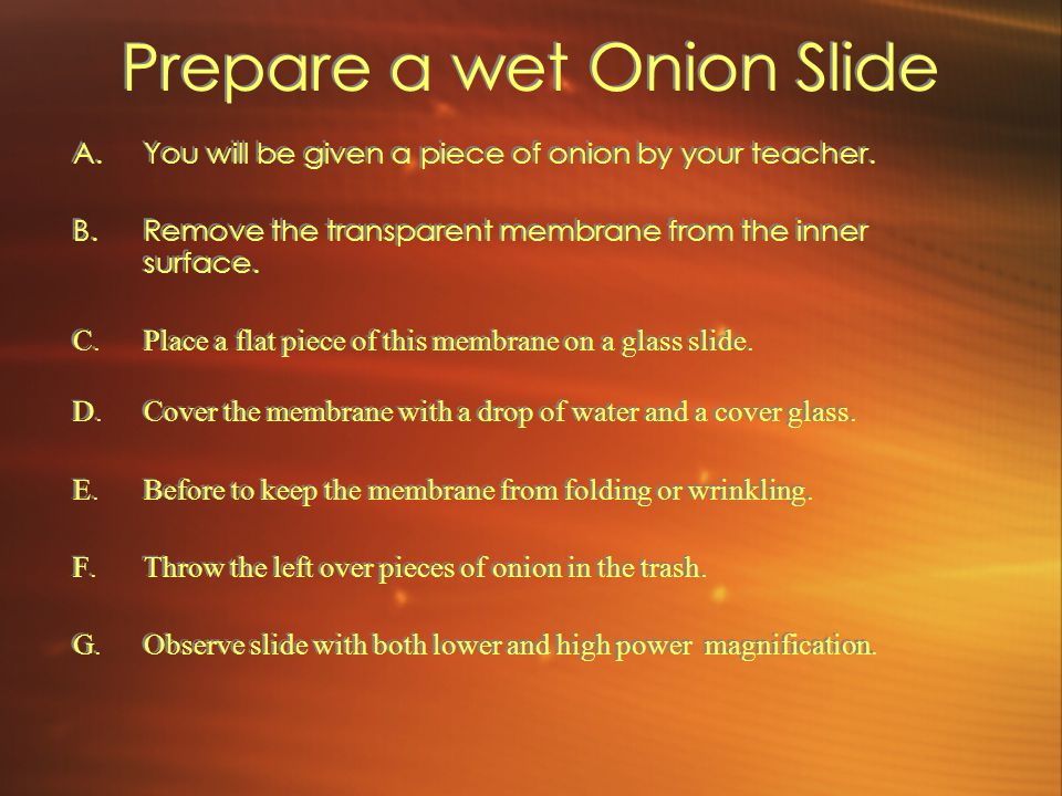 Prepare a wet Onion Slide A.You will be given a piece of onion by your teacher. B.Remove the transparent membrane from the inner surface. C.Place a fl