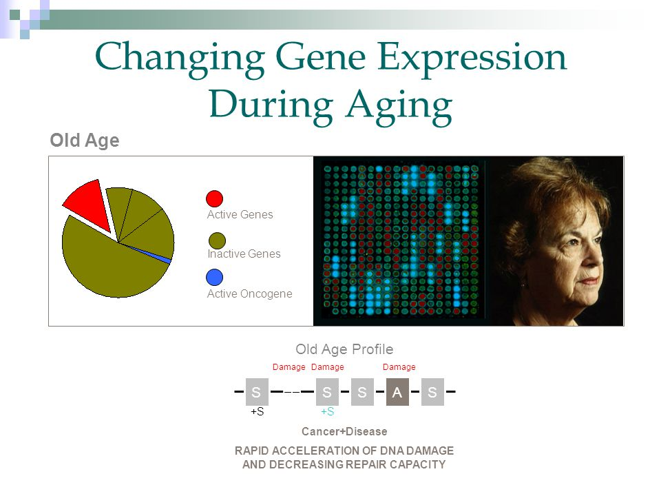 Active Genes Inactive Genes Active Oncogene Old Age Old Age Profile SSSSA +S Cancer+Disease RAPID ACCELERATION OF DNA DAMAGE AND DECREASING REPAIR CAPACITY Damage Changing Gene Expression During Aging