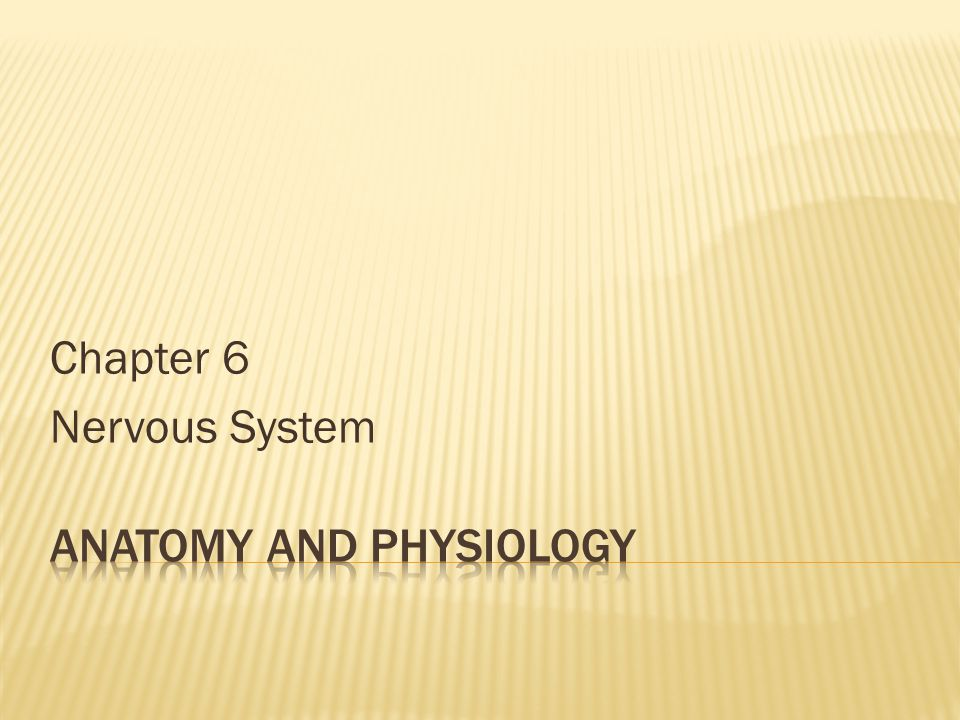 Chapter 6 Nervous System